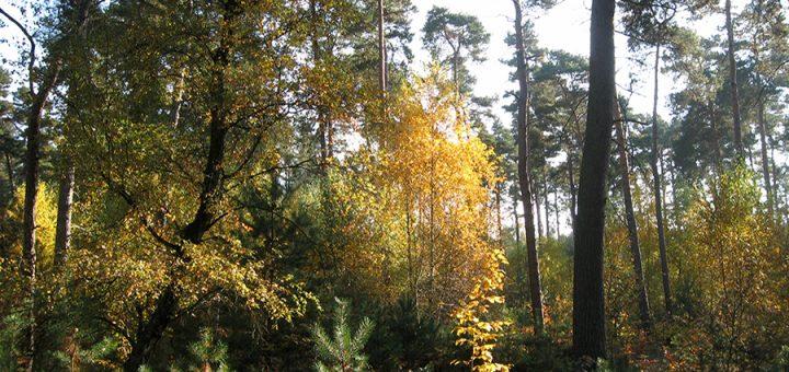 Wald Bilder aus dem Ökodorf Sieben Linden