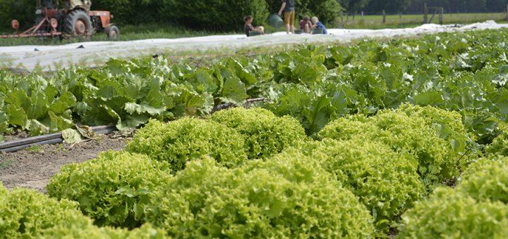 Garten Ökodorf Sieben Linden