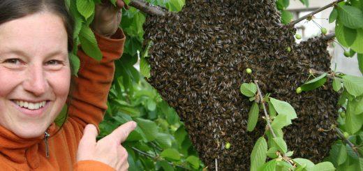 Nadine mit freiem Bienenschwarm