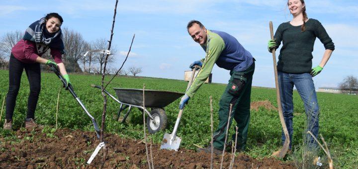 Agroforst Modul 1