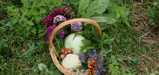 Agroforst Modul 2 - Ernte im Korb