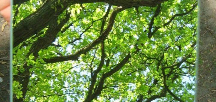 Wald Spiegellauf