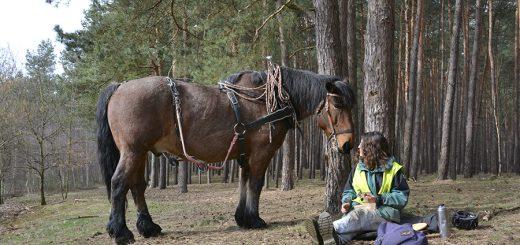 arbeiten_mit_pferden