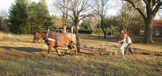 Tagesworkshop: Arbeiten mit Pferden