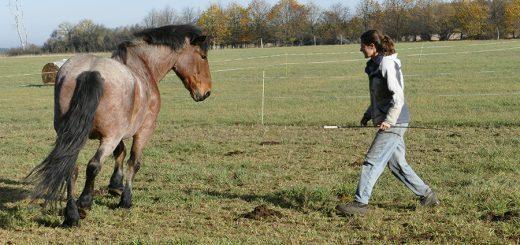 Pferdearbeit