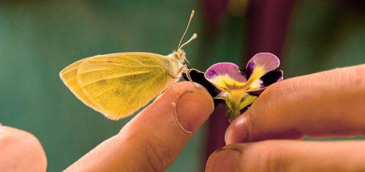 Mit allen Sinnen - Schmetterling und Hände